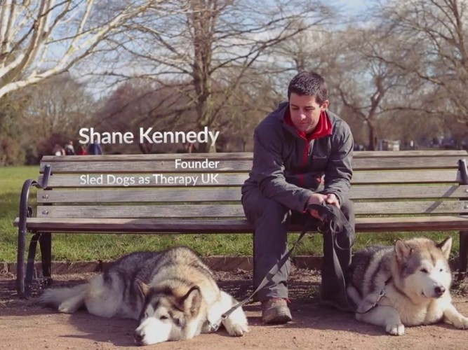 Sled Dogs as Therapy UK